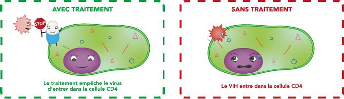 Le traitement empêche le virus d'entrer dans la cellule CD4